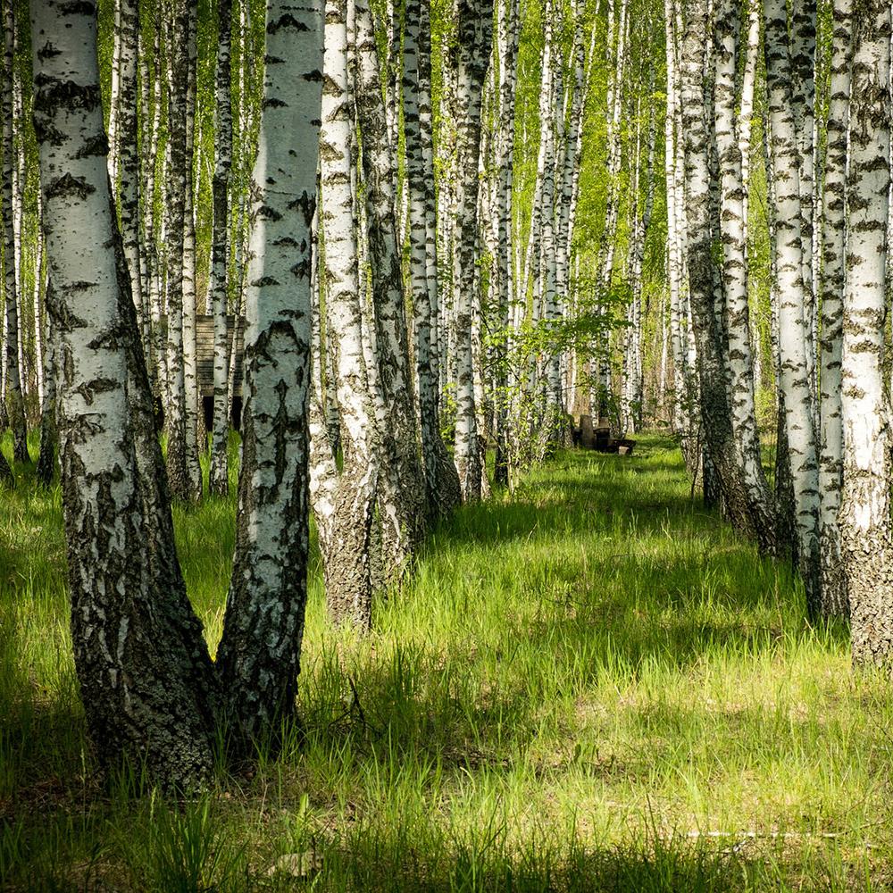 Обработка деревьев и газонов